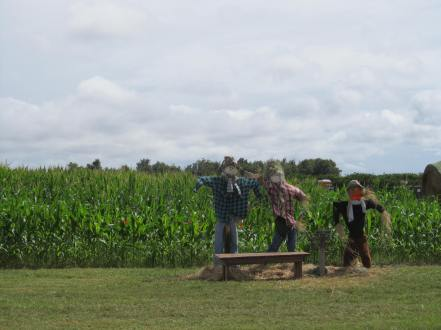 10 -field and scarecrows