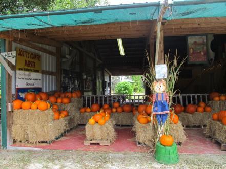 2 - pumpkins
